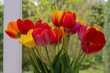 canvas print picture - Tulpenstrauss am Fenstrer im Detail