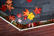 Quadro Autumn leaves in a rain gutter on a roof