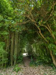 High thickets of bamboo. © Дмитрий Поташкин