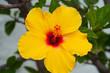 canvas print picture - Gelbe Blüte