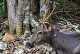 Deer in natural forests