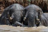 Best elephant friends in Africa