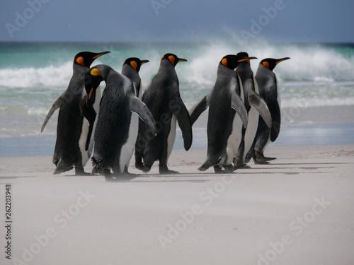 Fototapeten Pinguine Spaziergang der Pinguine