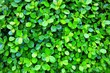 Leinwandbild Motiv Green Leaves in The Garden Background with Raindrops.