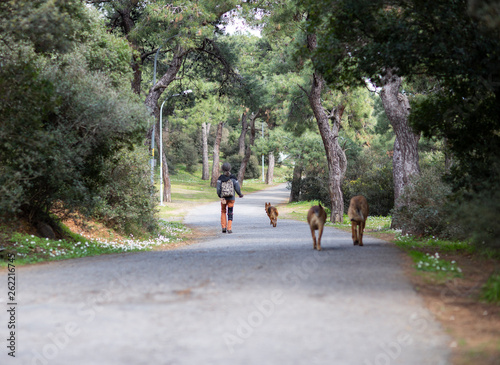 canvas print picture Dogs of forest.