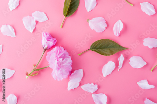 Spring cherry blossoms and green leaves on pink background. - 262230102
