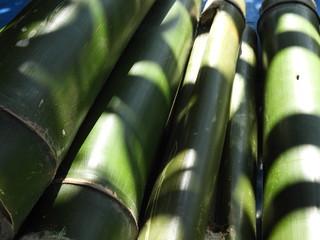 bamboo pieces used to make bamboo chicken or bamboo chicken biryani kept for sale © sravanbujji