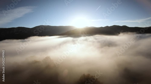 AERIAL: Flying above foggy forest treetops. Thick misty clouds rising from forest on cold morning day.