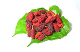 Mulberry freshly collected from the tree