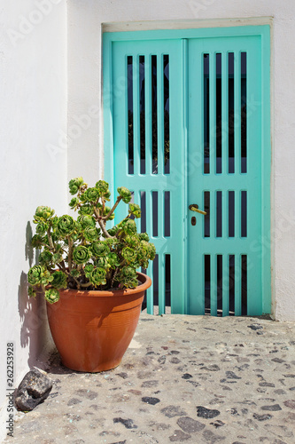 Blue door and green flower on white plaster wall