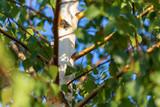 Green leaves on birch in summer