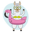 Llama with float and swimsuit