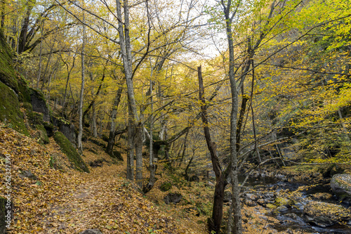 Amazing view of Devin river gorge, Rhodope Mountains, Bulgaria