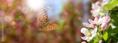 Schmetterling 548