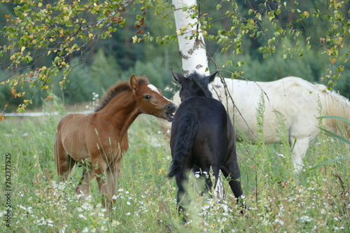 The image of a horse in the forest. Natural composition. Photography