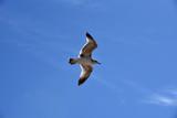 Unique photo of a seagull