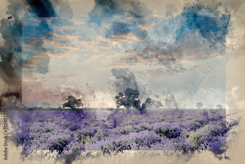 Watercolour painting of Beautiful dramatic misty sunrise landscape over lavender field in English countryside - 262433750