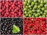 Set of fresh berries, raspberry, currant, gooseberry, black currant