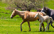 Horse with a little foal in the park - 262438502