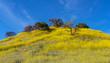 Malibu Creek State Park wildflowers