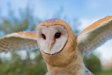 Portrait of white owl © Gelpi