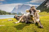 Kühe am Sebensee