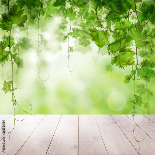 Green leaves with sunlight wooden background - 262526184