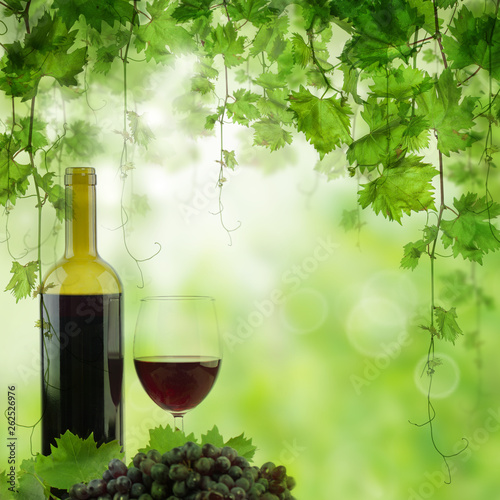Bottle and glass of red wine in vineyard. Vineyard in morning light, bottle of red wine on the table - 262526976