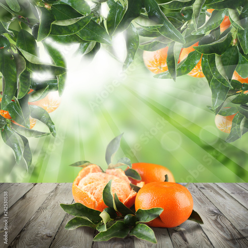 Tangerines on wooden table in Green garden - 262530538