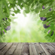 Figs tree garden and dark wooden table. Sunlight concept