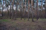 Forest near Kiev