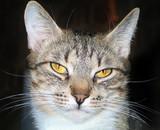 Cat pet closeup portrait