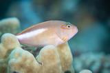 Reef life on coral reef of Hawaii