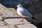 seagull on rock