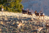 Morning Sun Deer Herd