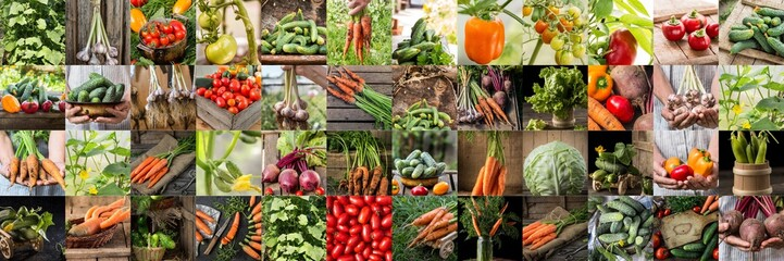 Collection with different color  vegetables. Healthy eating background