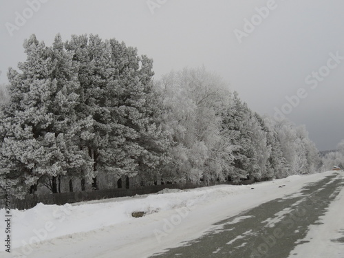 canvas print picture winter