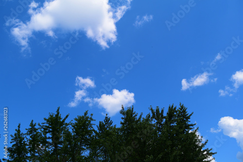 View from below through dark trees against the sky with white clouds.