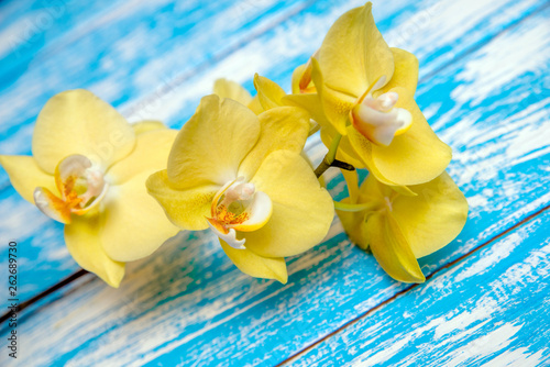 A branch of yellow orchids on a blue wooden background  - 262689730