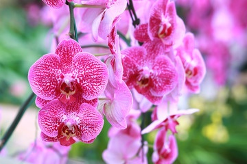 Close-up of Beautiful pink orchid flower in the garden