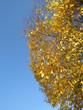 canvas print picture - Herbst in Deutschland