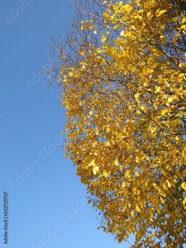 canvas print picture Herbst in Deutschland