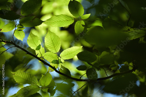 Closeup of leaves in summer