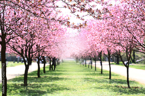 Beautiful blossoming trees in city park on spring day