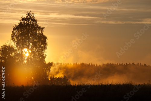 Meadow landscape with mist at dawn