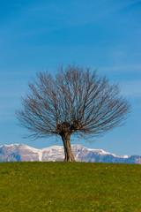 Landscape © Maurizio Sartoretto