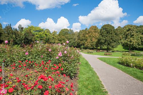 canvas print picture Spazierweg im Westpark München, blühende Rosenbeete