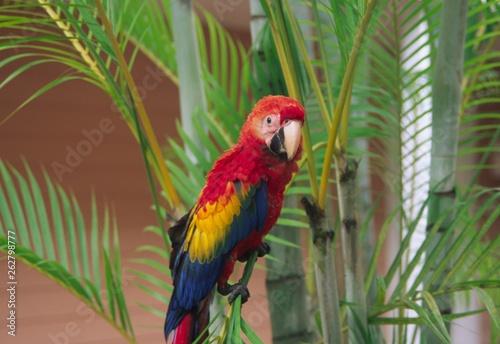 aras aus costa rica © fotobild40