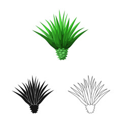 Vector design of agave and plant  icon. Set of agave and cactus vector icon for stock.