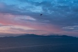 Sunrise on the sea with a blue sky and a flying Seagull over Monte Argentario